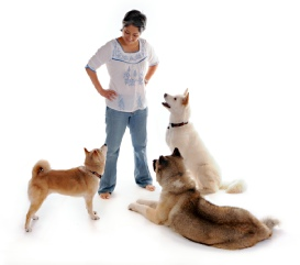Los Angeles Dog Trainer, Dorna Sakurai